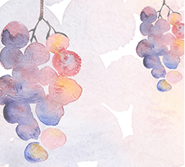 bio wines promotion